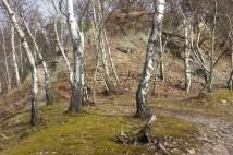 14km běžecká trasa: Zapomeňte na asfalt a vyzkoušejte běžecké traily Kunratického lesa v Praze