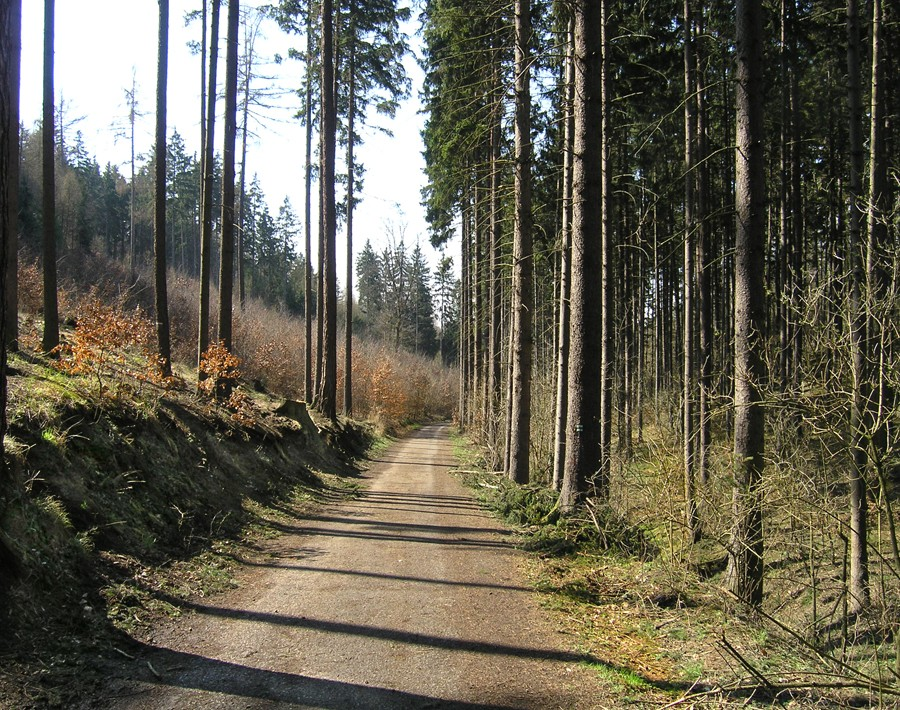 Běhání v Kunratickém lese