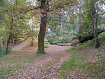 Běhání v Milíčovském lese