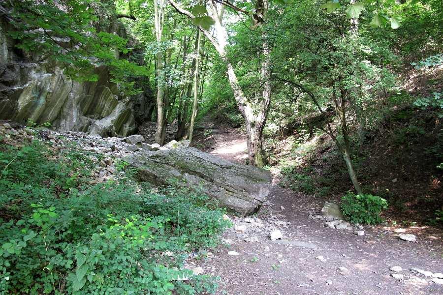 Běhání v Prokopském a Dalejském údolí