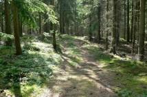 8,5km běžecká trasa na Třemošnou v Brdech