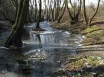 Bruslení na Milíčovském rybníce