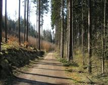 Bikování v Kunratickém lese