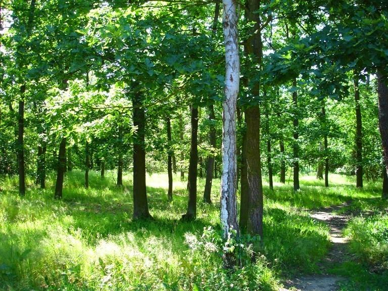 Horské kolo: Klánovický les, Čihadla