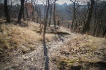 Trailové bikování po Krčském lese