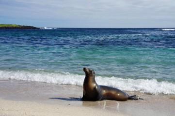 Surfování na Galapágách
