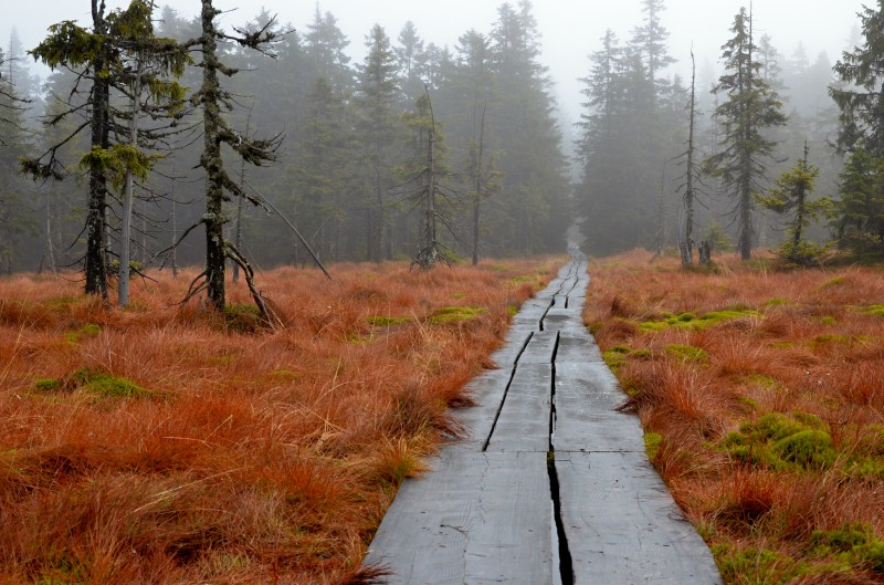 16km hike / run výlet za rašelinou Černé hory