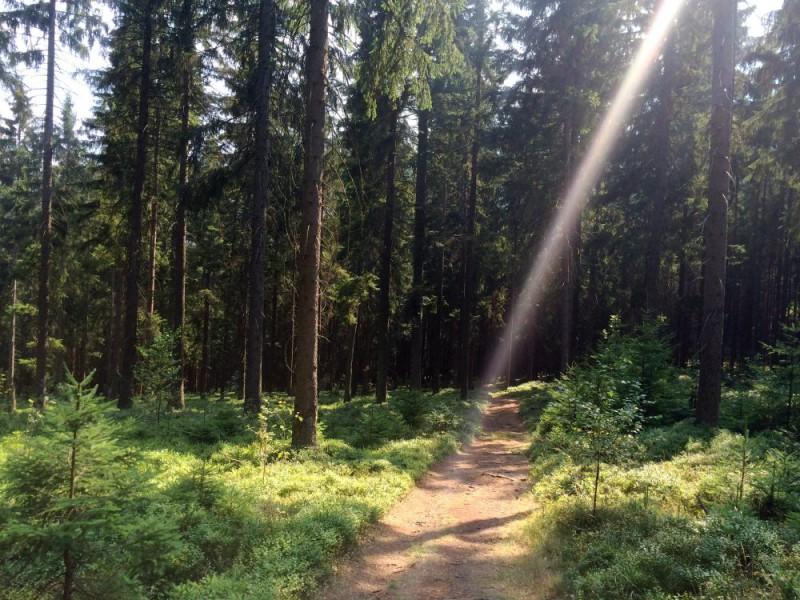 Ledečský trail přes Melechov a Stvořidla