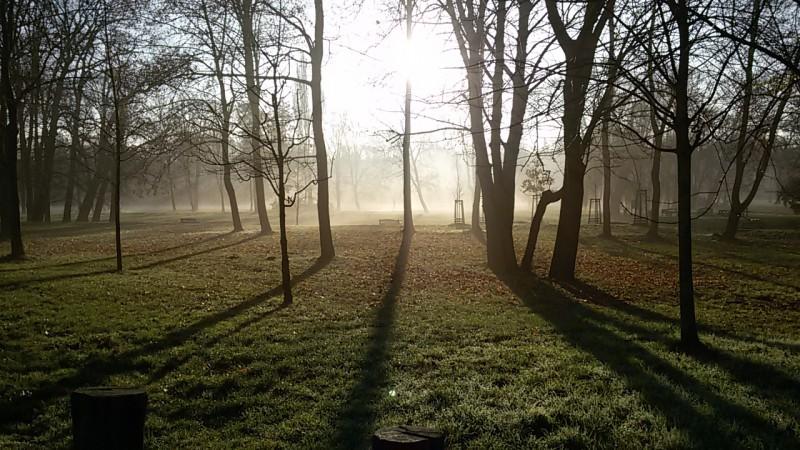 Suicide forest aneb Stromovka v ranní mlze