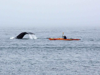 Na seakajaku za velrybami na Point Adolphus