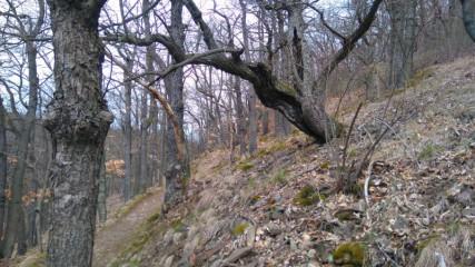 """Trek a běh v """"pralese"""" kousek za Prahou."""
