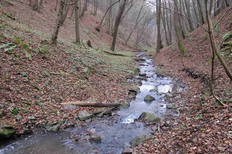 6km běžecká trasa: Údolím Zvolského potoka