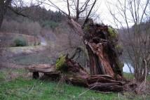 8km běžecký okruh: Přes Kulivou horu u Černošic