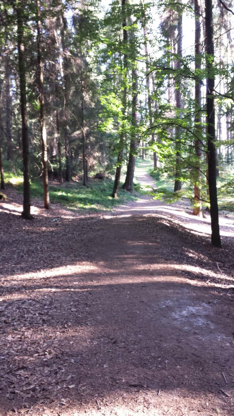 12km běh okolo Prachovských skal s vykoupáním