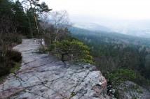 6,6km běžecká trasa v Brdech přes Plešivec