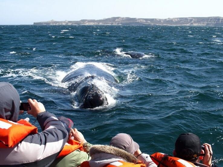 Velrybí a lachtaní ráj v Argentině