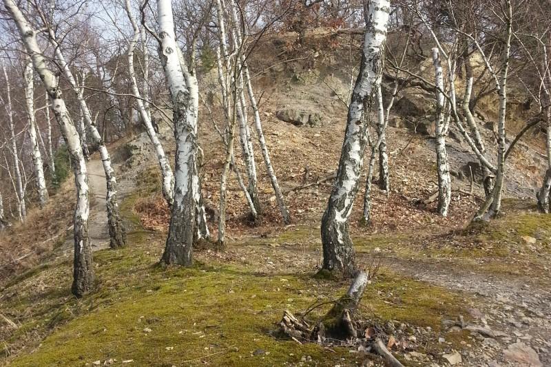 Lesní běžecké traily Kunratického lesa v Praze