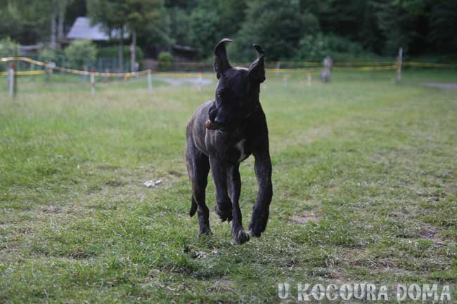 Helfštýn – cíl turistů, kovářů, lezců i psů