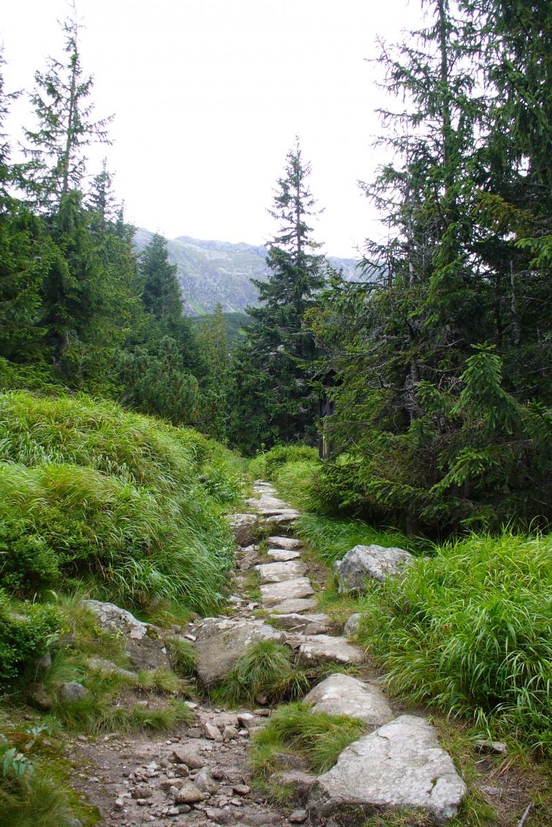 Krásný přírodní trailík klečí