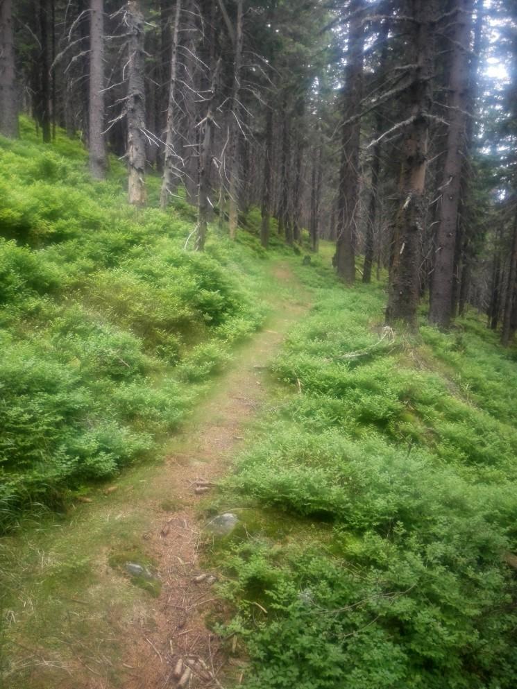 Lesní trailík