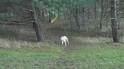 Účastník přespolního běhu VSK FTVS
